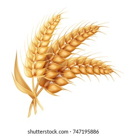 Barley ear with leaves realistic isolated. Wheat vector icon