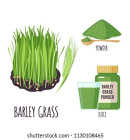 Barley grass set with powder and green juice in flat style isolated on white background. Organic healthy food. Medicinal herbs collection. Vector illustration.