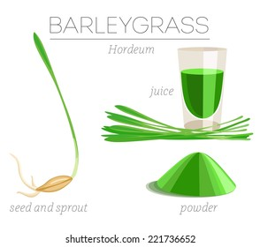 Barley grass superfood. Grain, sprout, juice and powder. Vector image