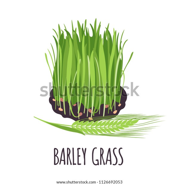 barley grass vector logo flat style stock vector royalty free 1126692053 https www shutterstock com image vector barley grass vector logo flat style 1126692053