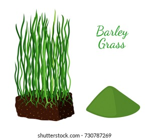 Barley grass, wheat. Vegetarian food, organic nutrition. Made in cartoon flat style. Vector illustration