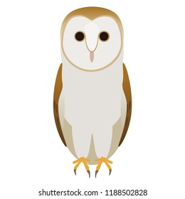 Barn Owl or Tyto alba