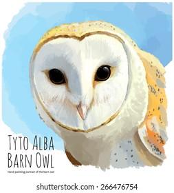 Barn owl or Tyto Alba - linear vector hand drawing