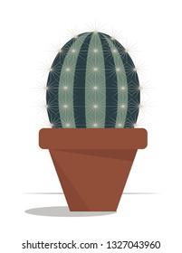 Barrel cactus in the pot, Cactus Plant