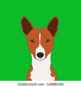 Basenji, The buddy dog