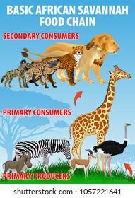 Ilustraciones, imágenes y vectores de stock sobre Education