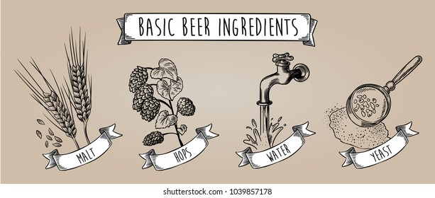 Basic beer ingredients. Hand drawn vintage vector line art illustration for label, menu, poster, flyer