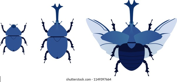 the basic beetles vector on white background