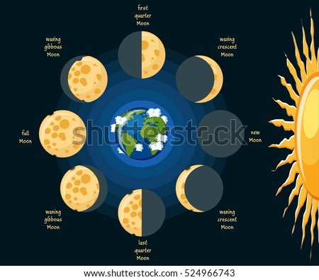basic moon phases diagram cheese moon stock vector (royalty free