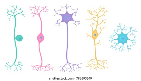 Basic Neuron Types