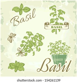 Basil, herb, plant, nature, vintage background, packaging calligraphy