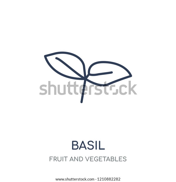 Basil Icon Basil Linear Symbol Design Stock Vector Royalty Free