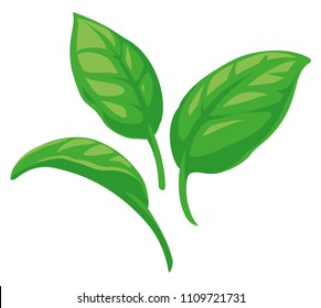 Basil Leaves vector flat graphic illustrations, fully adjustable and scalable, ideal for Italian pasta sauce, pesto labels etc.