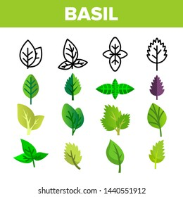 Basil Leaves Vector Thin Line Icons Set. Basil, Aromatic Spice Green, Violet Leaves Linear Pictograms. Organic Italian Culinary Herb with Spicy Taste, Fresh Foliage Color Flat Illustrations