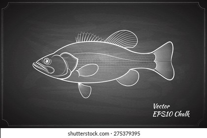 Bass fish chalk painted on chalkboard outline vector illustration