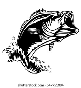 Bass fish isolated on white. Perch vector illustration.