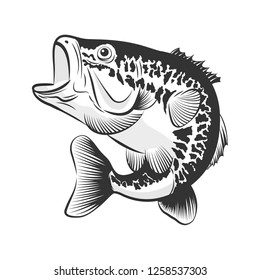 Bass fish line drawing style on white background. Design element for icon logo, label, emblem, sign, and brand mark.Vector illustration.