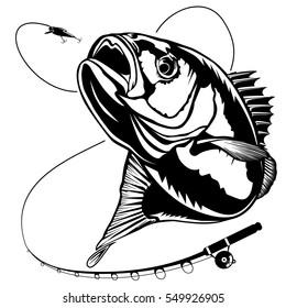 Bass fish. Perch fishing vector illustration.