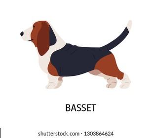 Basset Hound. Cute funny hunting dog or scenthound with large ears and short legs isolated on white background. Adorable purebred domestic animal or pet. Vector illustration in flat cartoon style.