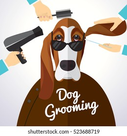 Basset Hound getting groomed at pet grooming salon.