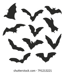 bat shadow silhouette at night midnight tropic forest fruit tree mammal mystery cave set pose
