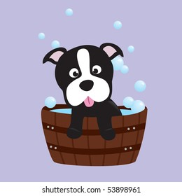 bath-time terrier pup