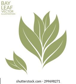 Bay leaf. Vector illustration EPS10