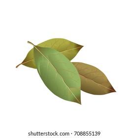 Bay leaves. Vector illustration