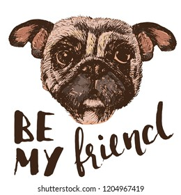 Be my friend qoute, hand drawn pug portrait, isolated on white, vector illustration