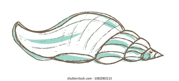 Beach Shell Hand Drawn Illustration