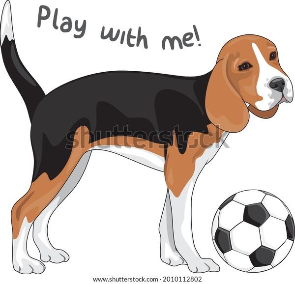 beagle-asks-play-him-me-600w-2010112802.