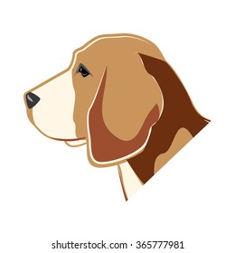 Beagle, dog