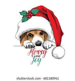 Beagle dog in a big Santa's cap and with a Holly berry. Vector illustration.