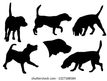 beagle dog running, standing and hunting - set of black and white vector canine silhouettes