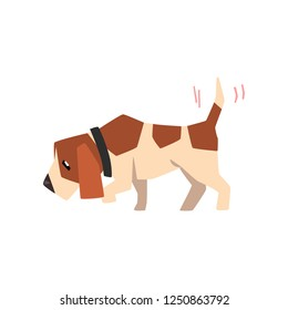 Beagle dog searching for a trace and wagging its tail, cute funny animal cartoon character vector Illustration