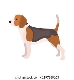 Beagle gog color vector icon. Flat design