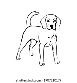 Beagle hound silhouette. Cute beagle dog standing and watching  black outline isolated on white background. Vector illustration