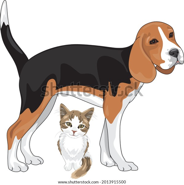 beagle-kitten-waiting-their-owners-600w-