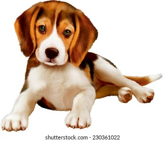 beagle puppy laying over white background
