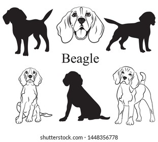 Beagle set. Collection of pedigree dogs. Black white illustration of a beagle dog. Vector drawing of a pet. Tattoo.