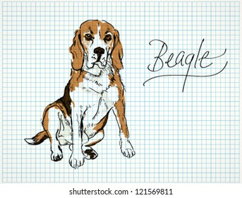 Beagle / Vector sketch of dog