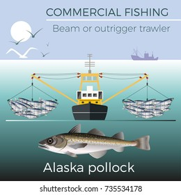 Beam or outrigger trawler. Alaska pollock. Vector illustration