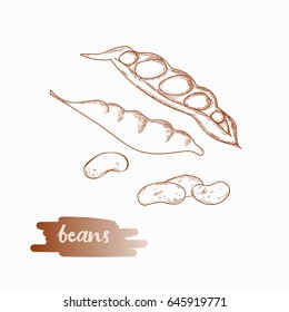 Beans hand drawn illustration isolated on white background.
