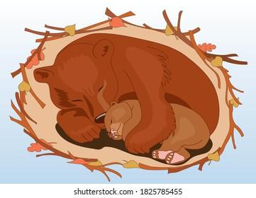 A bear with a bear cub sleeps in a den in the winter in an embrace. Ursa.