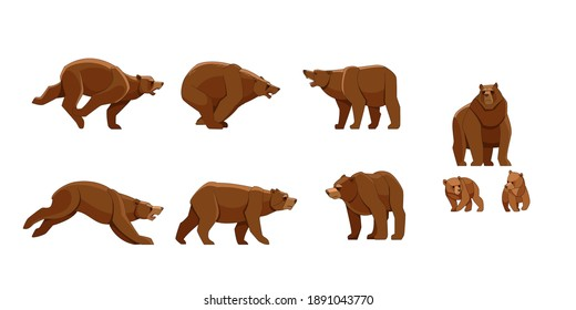 Bear in different poses. Flat vector style set of large bears on white background. Wild forest creature with brown fur. Cartoon character of big mammal animal.