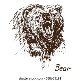 Bear growling, muzzle with opened mouth, with inscription, hand drawn doodle, sketch in pop art style, vector illustration