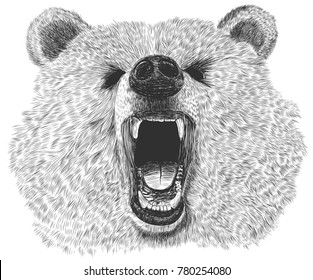 Bear illustration for your t shirt prints and all your designs