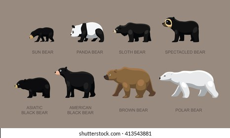 Bear Sizes Cartoon Vector Illustration