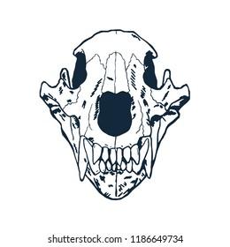 Bear Skull hand drawn on white background. Vector illustration