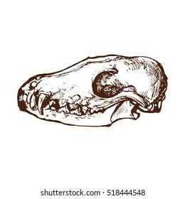 Bear skull hand drawn sketch stock vector illustration